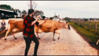 Guy Shows Off His Dancing Skills in Front of Cattle
