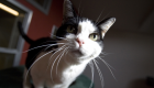 New York Could Become The First State To Ban Declawing