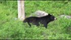 Tourists Gather Dangerously Close to Wild Black Bear in Algonquin Park