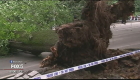 Central Park tree collapses