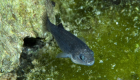 Drunk Dudes Might Have Killed One Of The Rarest Fish In The W...