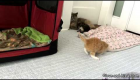 Cute Kitten Tries to Get Used to Walking
