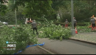Central Park tree falls on mom, kids