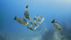 These Six-Pack Rings Feed Sea Animals Instead Of Trapping Them