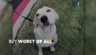 Volunteers find dog that went missing after car crash